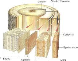 sistema parquet sezione del tronco